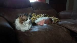 newborn baby napping on the couch with maine coon cat