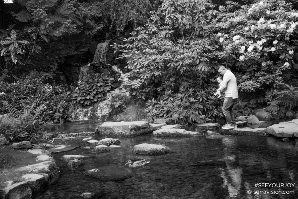 Dad carries his one year old baby across a pond stepping from rock to rock at crystal springs rhododendron garden